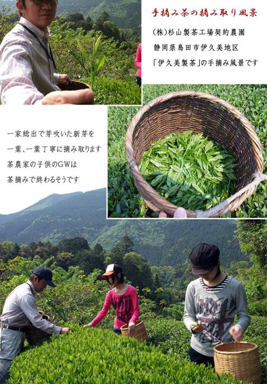 熟成茶の原料