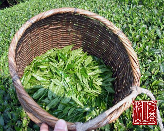 手摘み茶 茶葉