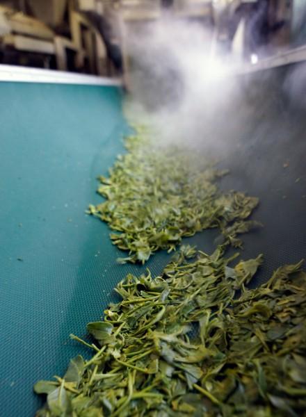 深蒸し茶製法