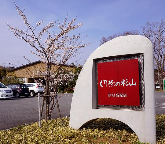 伊豆高原 桜 開花