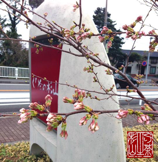 伊豆高原 2013年 桜