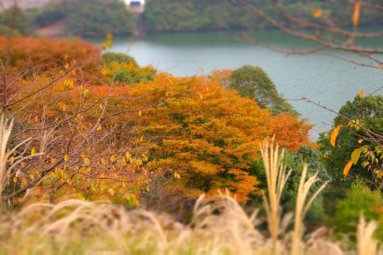 伊豆・伊東市の松川湖の紅葉
